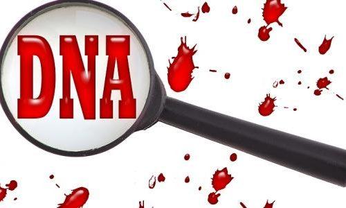 معلومات عن الـ DNA